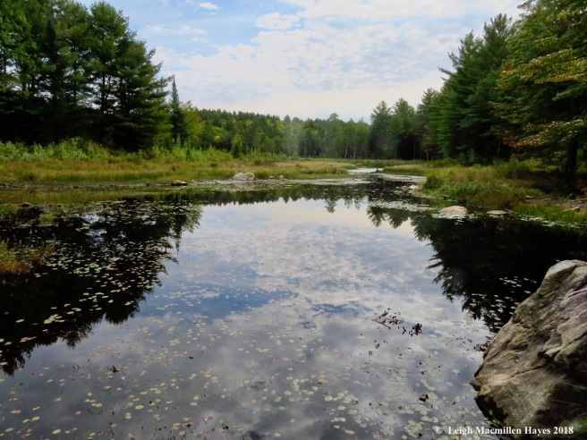 6-beaver pond