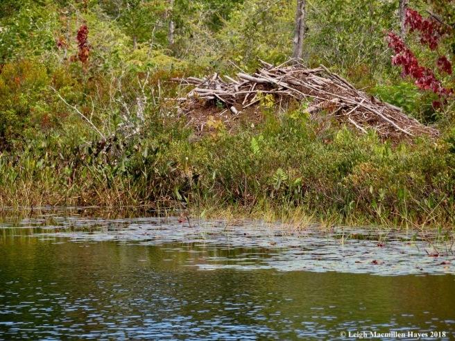 7-beaver lodge