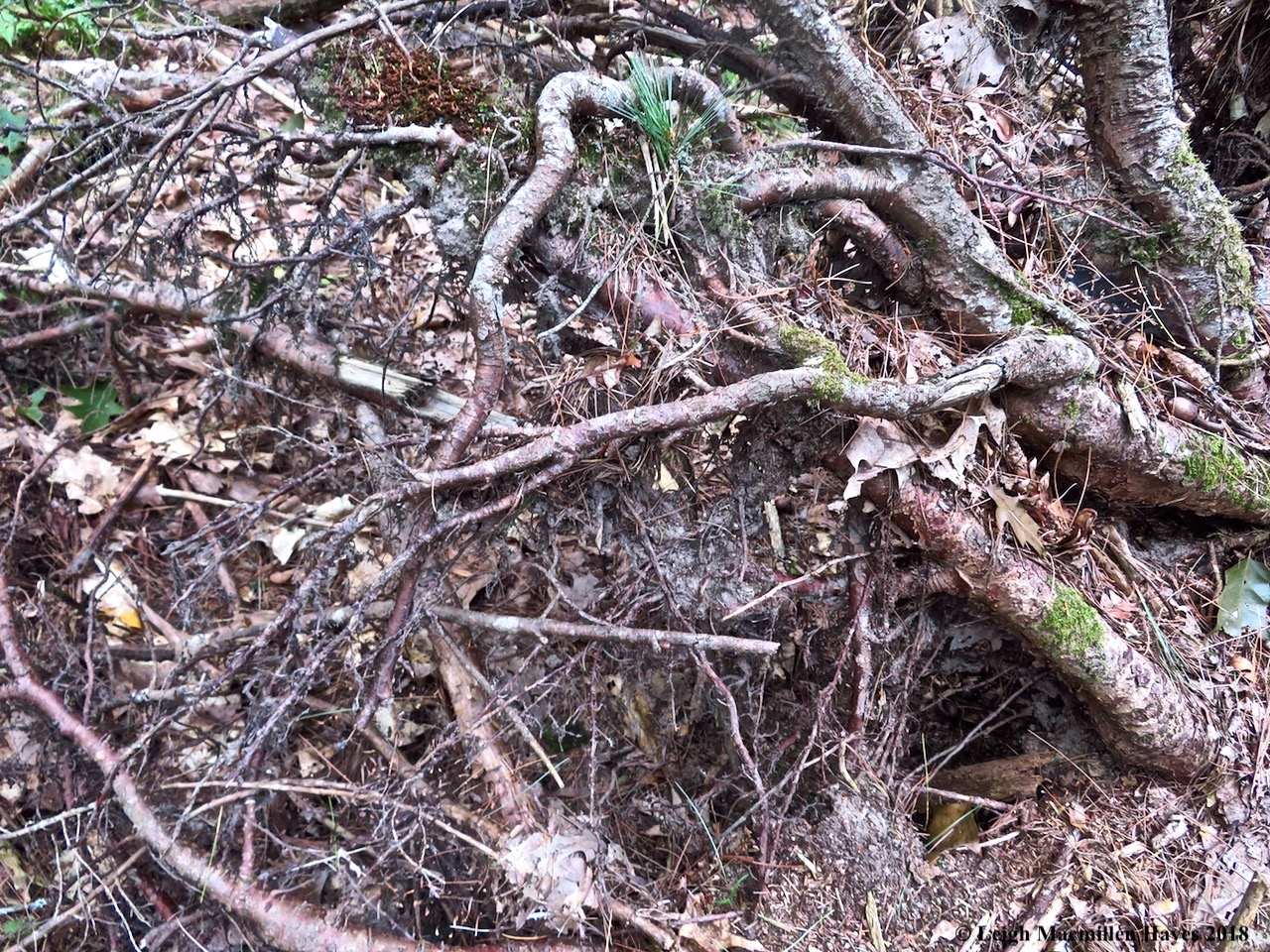 9-uprooted