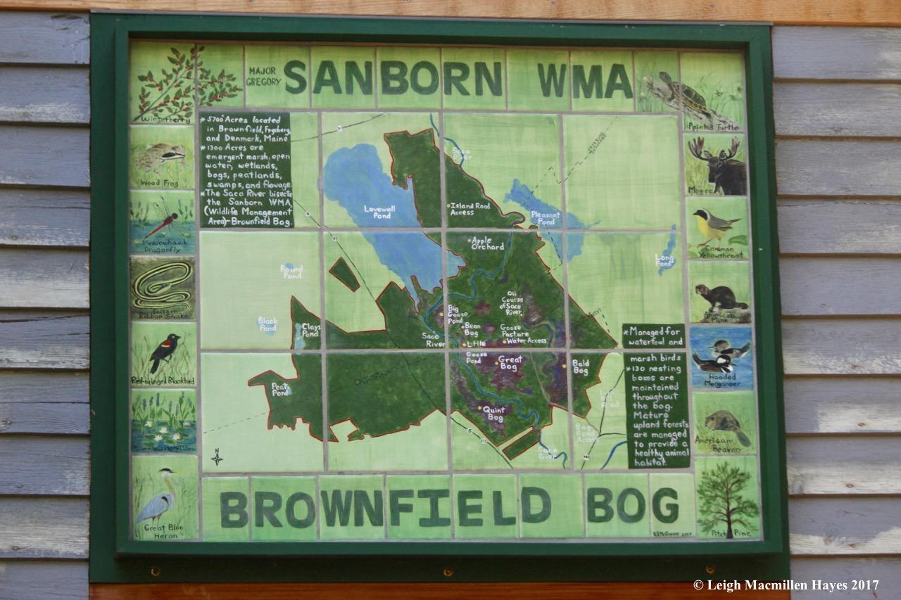 Brownfield Bog | wondermyway