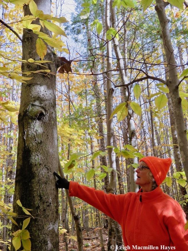 10-Pam's bear tree 1