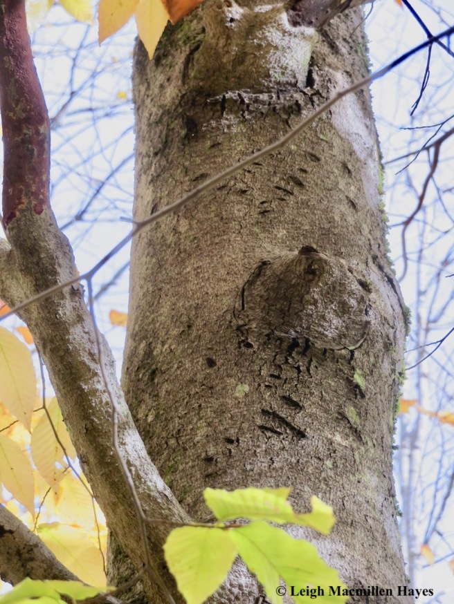 10-Pam's bear tree
