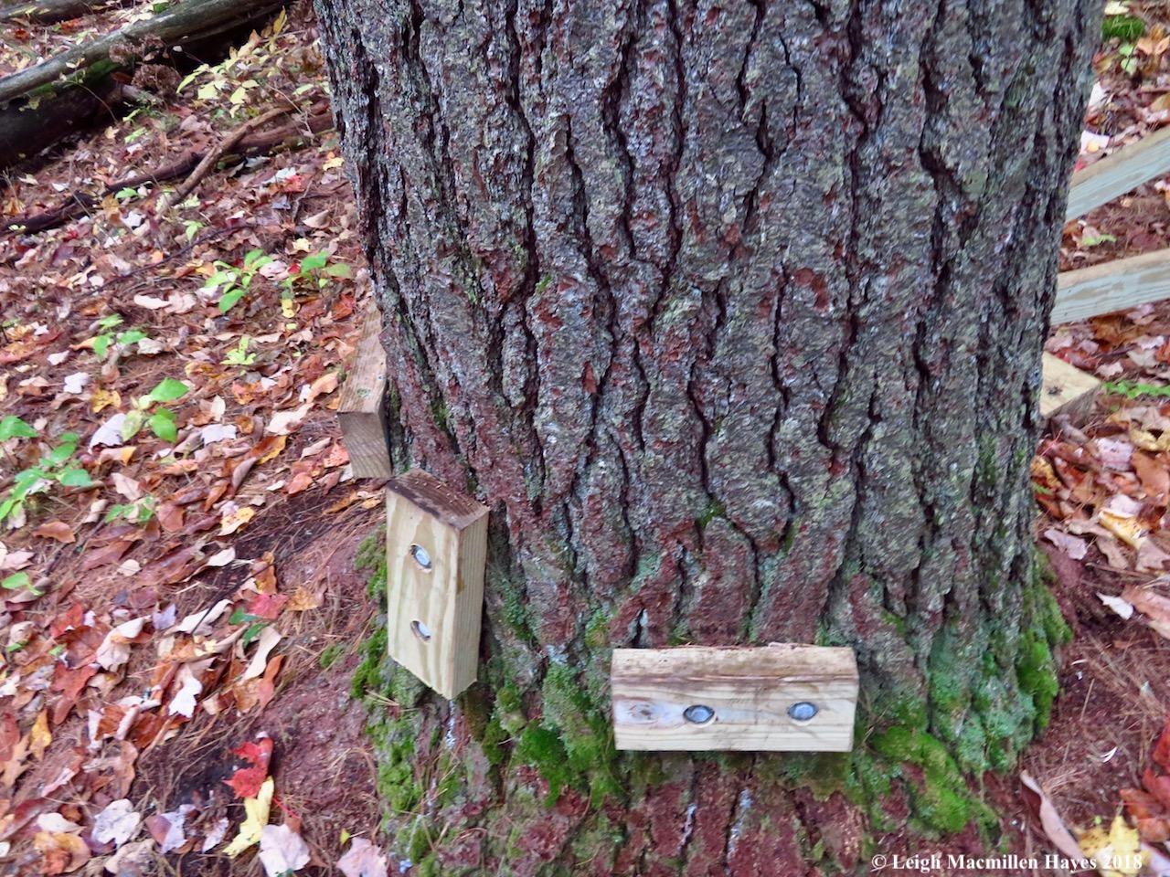 14-around the white pine