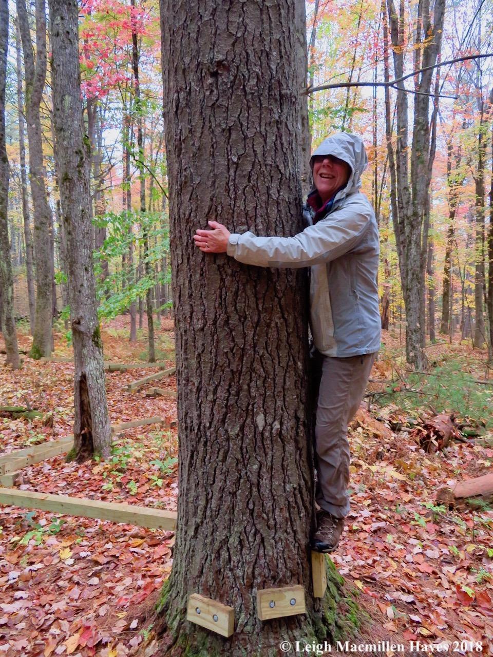 15-tree hugger!