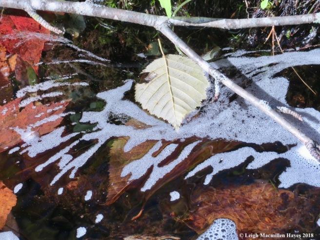 18-suds reflect leaf