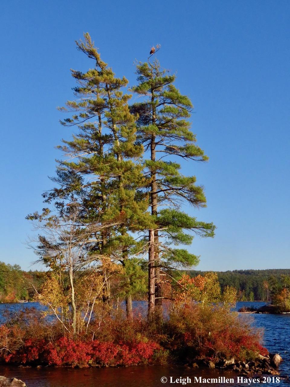 21-Eagle over Moose Pond