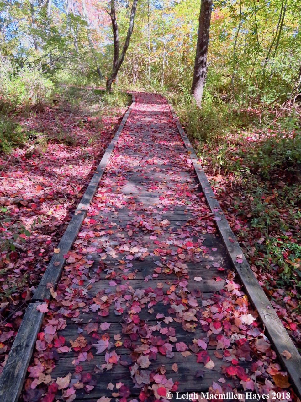 21-Rachel Carson Wildlife Reserve