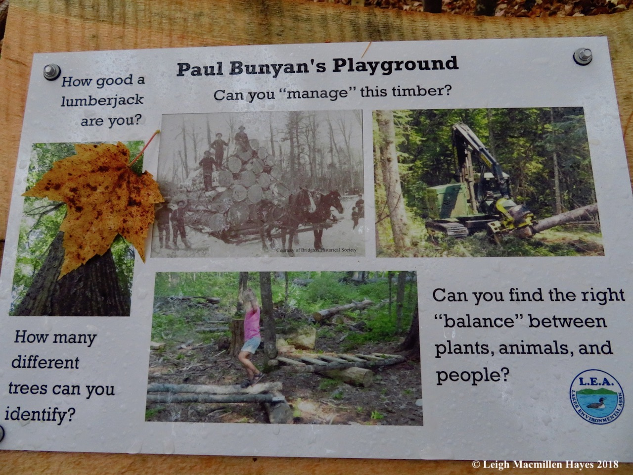 26-Paul Bunyan's Playground