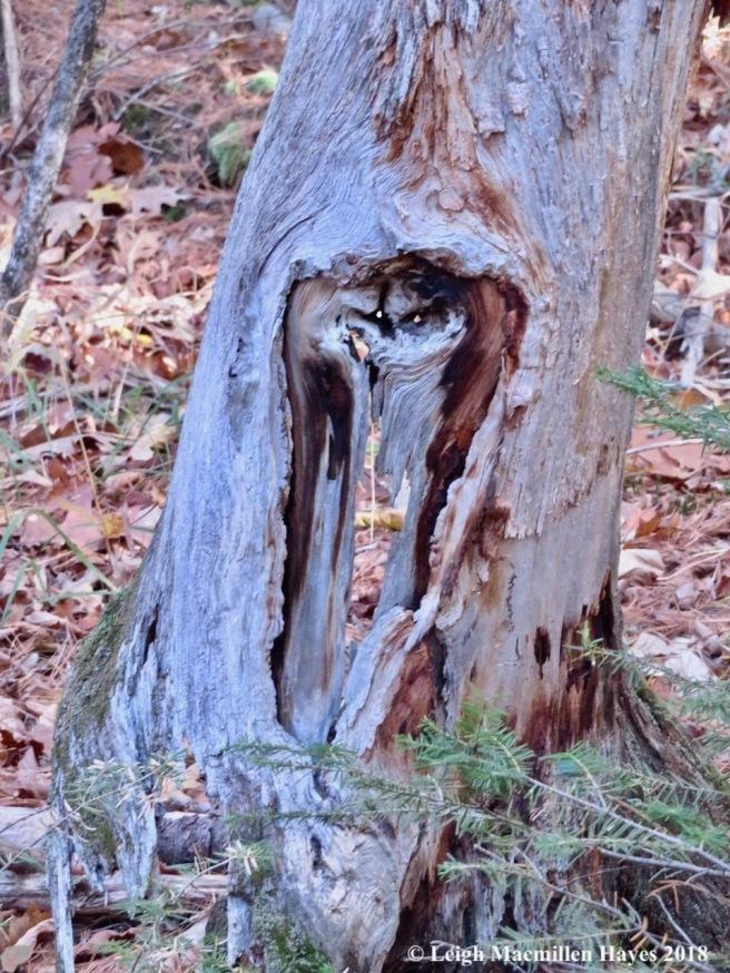 28-tree spirit