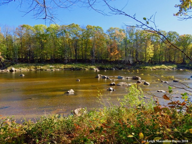 3-clear view of the Saco River