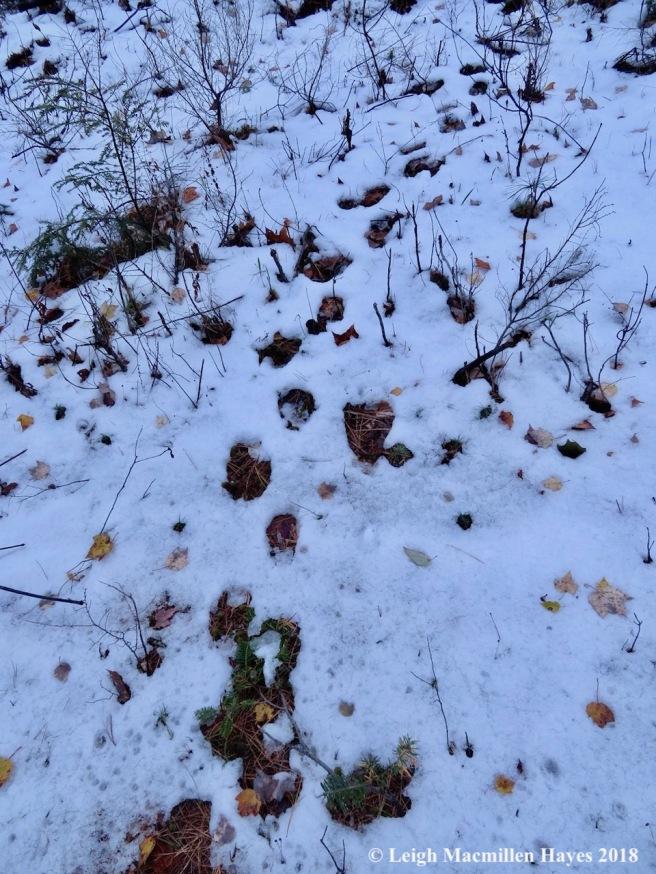 3-porcupine tracks