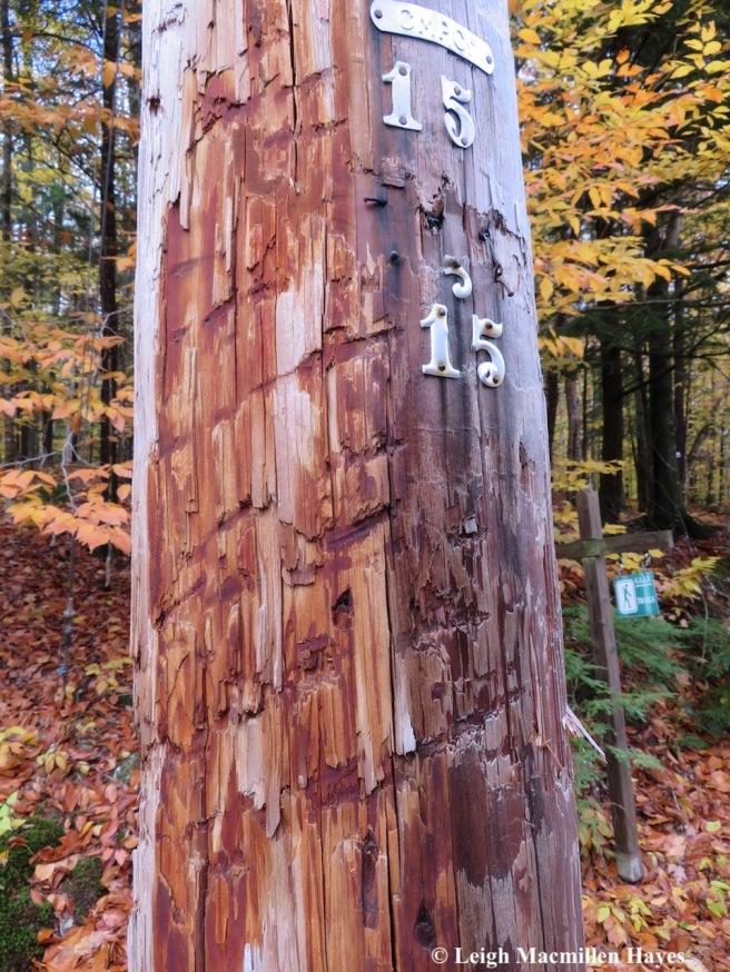 4-bear pole