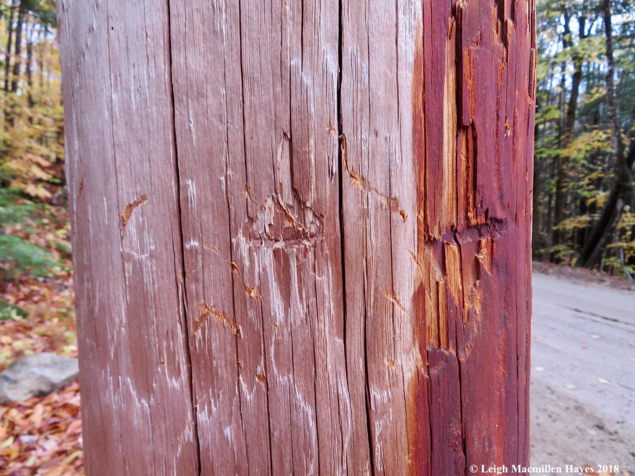 5-scratches on bear poles