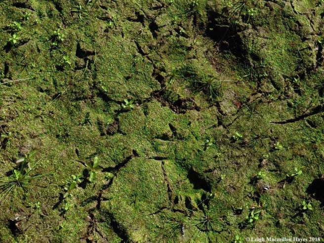 5a-racoon and bird tracks