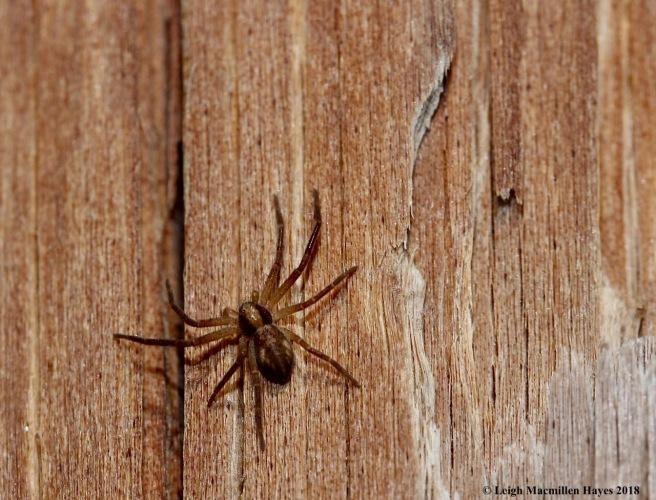 6-spider