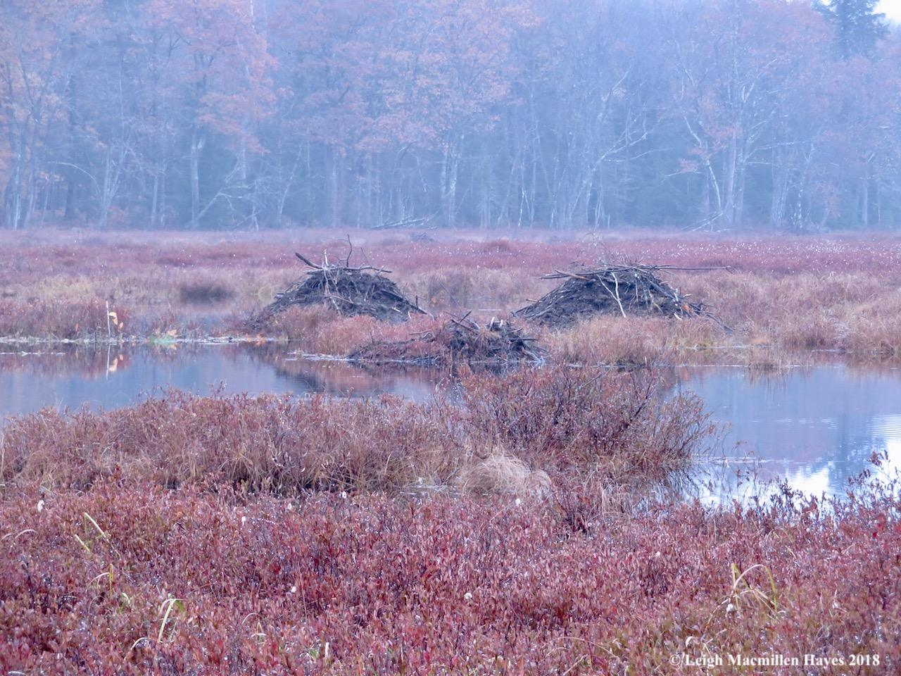 3-beaver lodges
