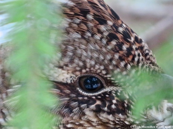 5-eye to eye